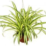 Three NASA Approved Plants that Improve Your Indoor Air Quality