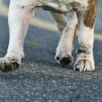 Are Your Pets Tracking These Outdoor Hazards into Your Home?