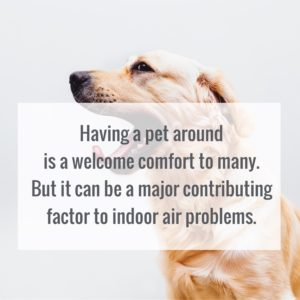 Indoor air can be dangerous for those with pets