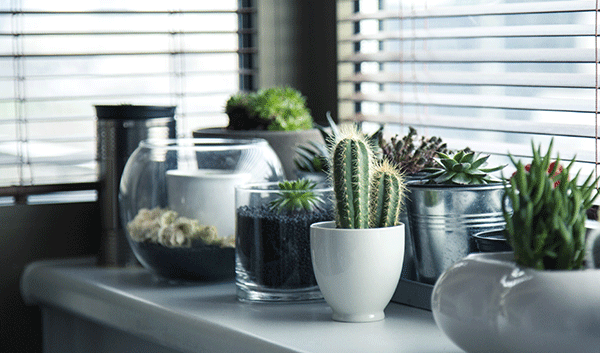Cactus on windowsill creating indoor oasis