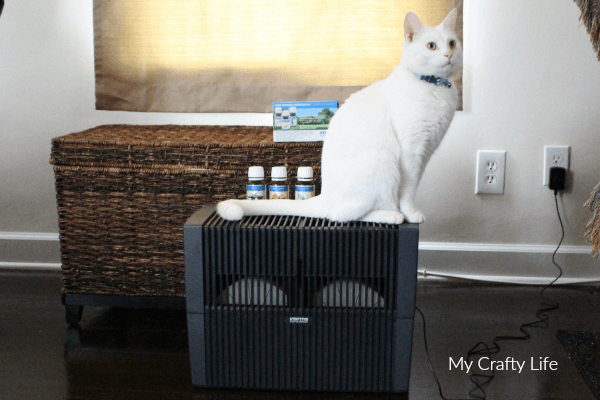 Frosty the cat loves the Venta Airwasher