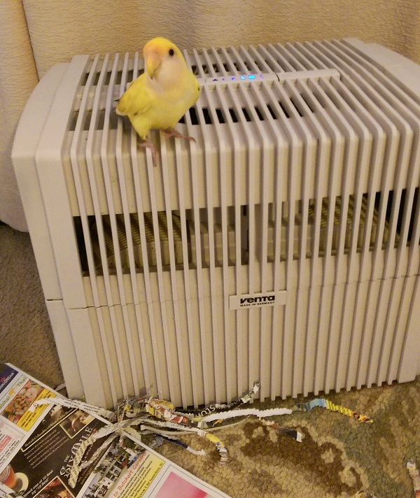 Wildlife and pets like birds need healthy air