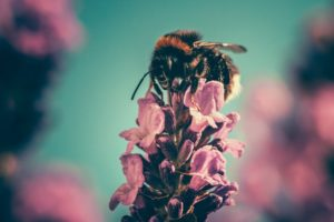 Air pollution can damage wildlife like insects and bees