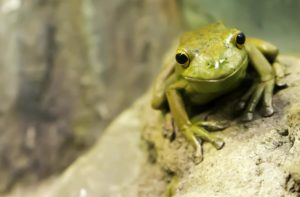 Wildlife like frogs and other amphibians experience pollution