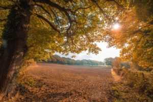 Sun shining over field of fall allergies