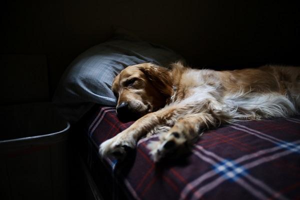 Dog getting good sleep on bed