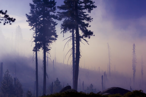 Wildfires spread across forests