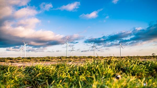 Windmills in ragweed field