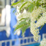 Reduce Spring Allergy Symptoms at Home with These Five Tips